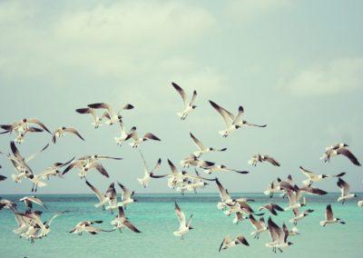 seagulls 815304 1280