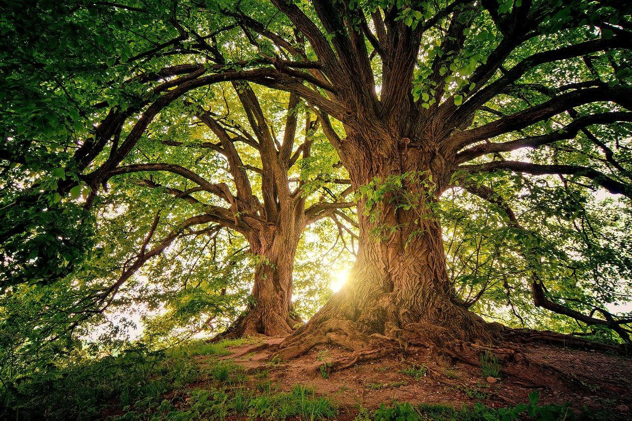 tree 3822149 1280