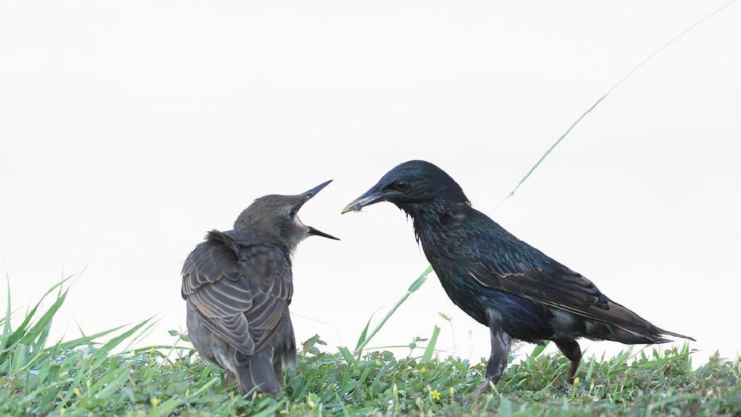 Ecología-y-conservación-de-los-recursos-naturales-culiacan-aaves